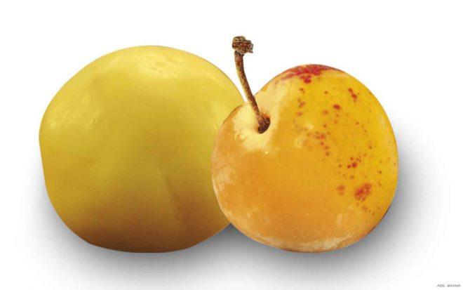 Fruchtkugel Mirabelle nussundgenuss